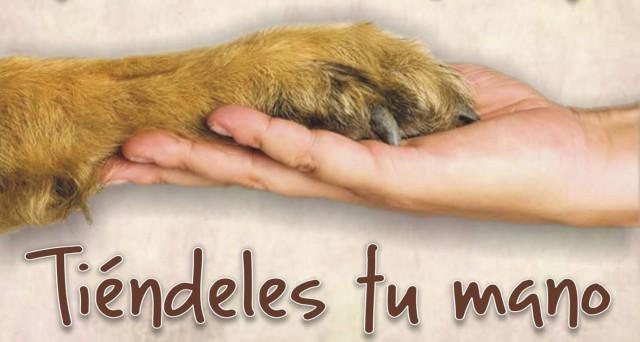 Rastrillo Benéfico, en Favor de los Animales Abandonados...